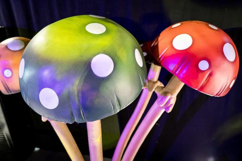grzyby dekoracyjne