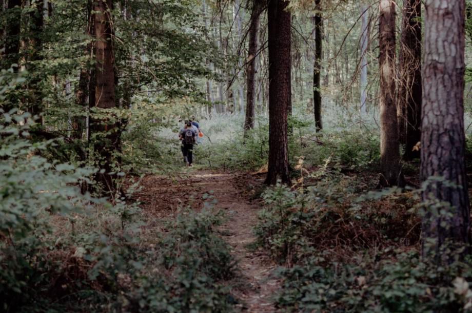 gra terenowa w lesie, polska express